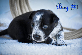 Boy #1.jpg