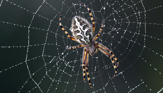 How spiders terrorized a woman with a creepy midnight nursery rhyme