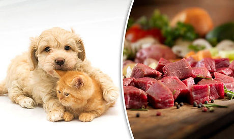 Dog-and-cat-food-diets-903380.jpg