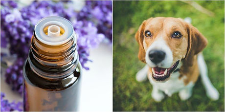 dog-essential-oils.jpg