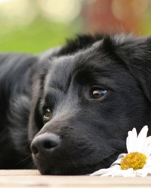 homeop  dog.jpg