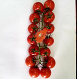 tomate cerise grappe.jpg