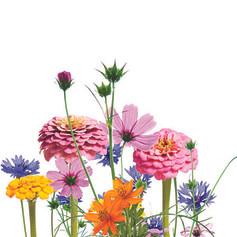 Mélange de printemps Gamme famille Gamme Merci maîtresse Gamme Fête des mères Gamme Fêtes de pères