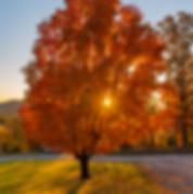 lakelandtree.jpg