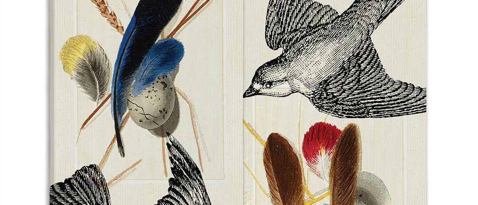 Bird (Sparrows and Specimens) Matches