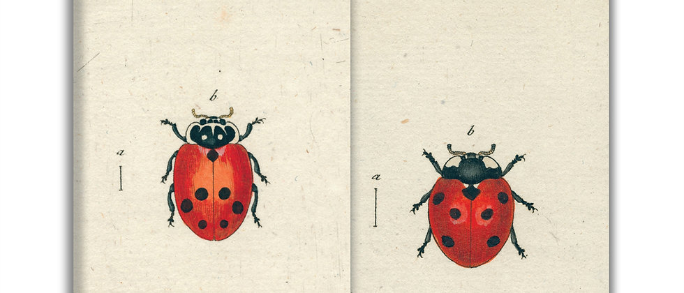 Lady Bug Matches