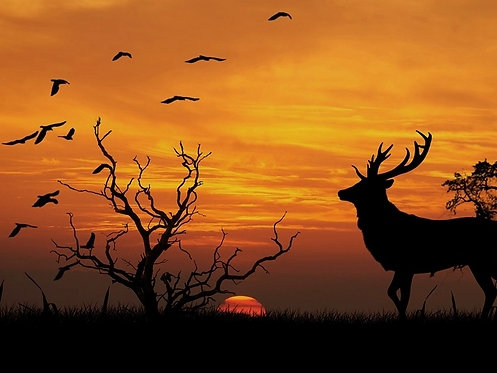 Voyage chamanique, Animal Totem - Maud Séjournant - MP3