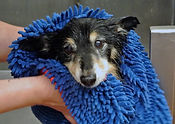 Dog Being Dried & Dog Grooming