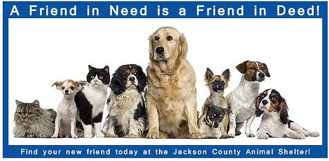 Dog Adoption Link