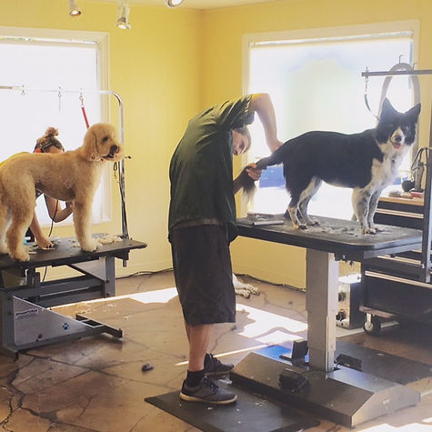 Barking Beauty Parlor Dog Grooming Tables