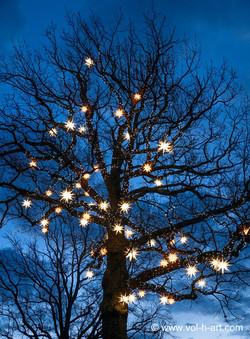 Weihnachtlicher Baum in Herrnhut
