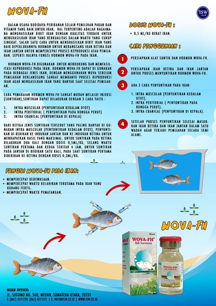 Cara Penyuntikan Hormon Pematang Gonad pada Ikan