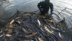 Kondisi ini yang bikin Ikan Stres dalam Tambak