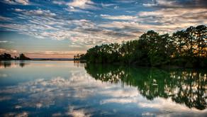 Ledakan Populasi Ganggang Ancam Kehidupan Organisme Perairan di Teluk Chesapeake