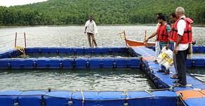 Perangkat Flotasi yang Dibutuhkan untuk Budidaya Ikan Nila di KJA