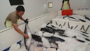 Per September Skema Baru Monitoring Impor Ikan ke AS Diterapkan