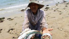 Nelayan Vietnam Pertanyakan Keamanan Konsumsi Pasca-insiden Kematian Jutaan Ikan