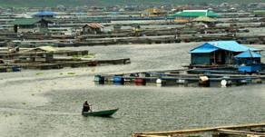 Keramba Jaring Apung (KJA) di Perairan Danau Toba