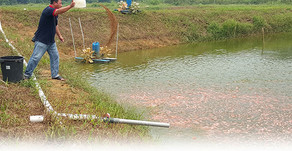 Oksigen Terlarut dalam Budidaya Perairan