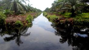 Pengolahan Limbah Sawit Pengaruhi Kualitas Air Permukaan di Desa Bungku Jambi