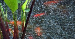 Mewaspadai Perubahan pH Tambak Selama Musim Hujan