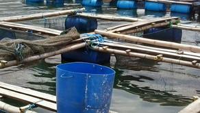 Mempersiapkan Konstruksi Keramba Jaring Apung untuk Budidaya Ikan Kerapu