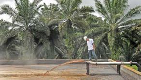 Aerasi Faktor Penting Proses Pengolahan Limbah Kelapa Sawit