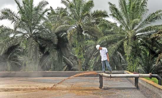 Pengolahan Limbah Kelapa Sawit