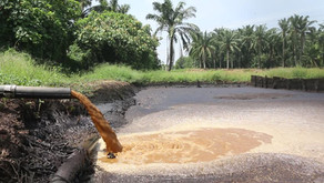 Memanfaatkan Gas Metana Limbah Cair Kelapa Sawit untuk Sumber Listrik