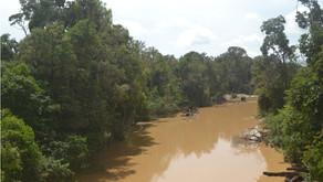 Buangan Limbah Cair Sawit Sebabkan Naiknya Temperatur Air Sungai