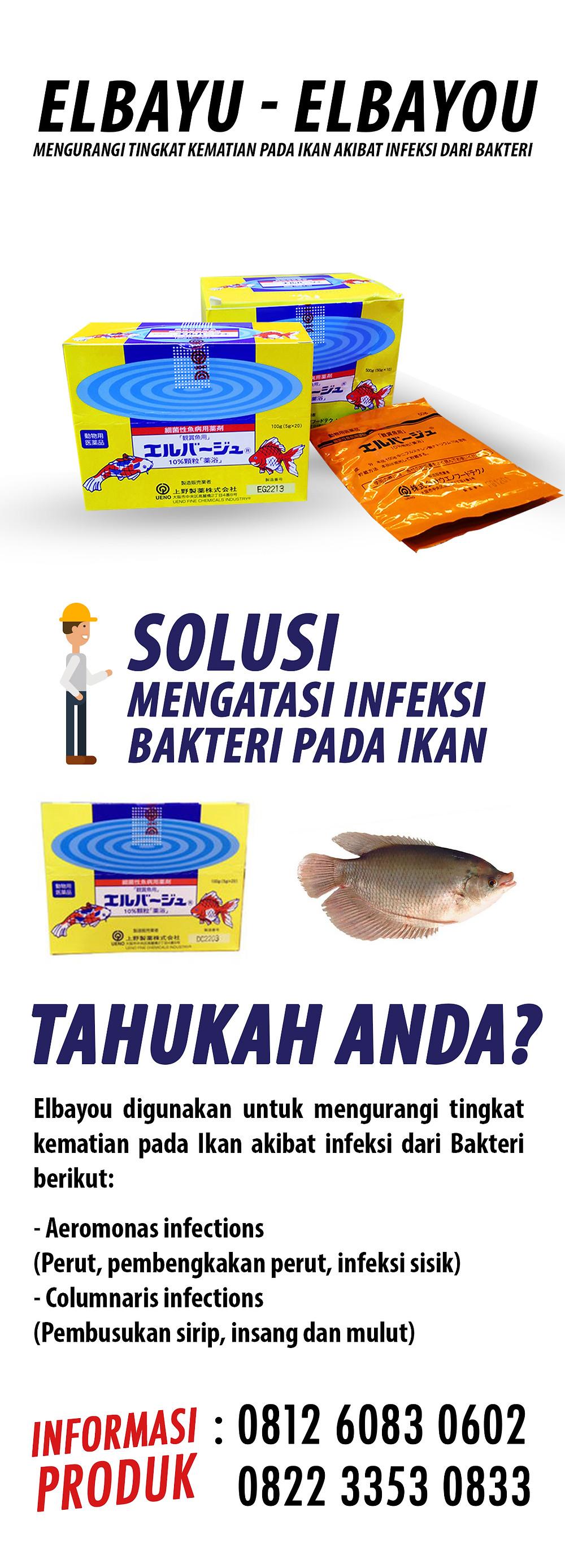Jual obat pencegah infeksi pada ikan