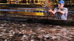 Benarkah Ukuran Pellet yang Lebih Kecil Baik untuk Pertumbuhan Ikan?