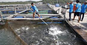 Solusi Mengatasi Kematian Ikan dalam Jumlah Besar