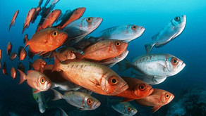 Pastikan Ikan Mendapatkan Mineral yang Cukup