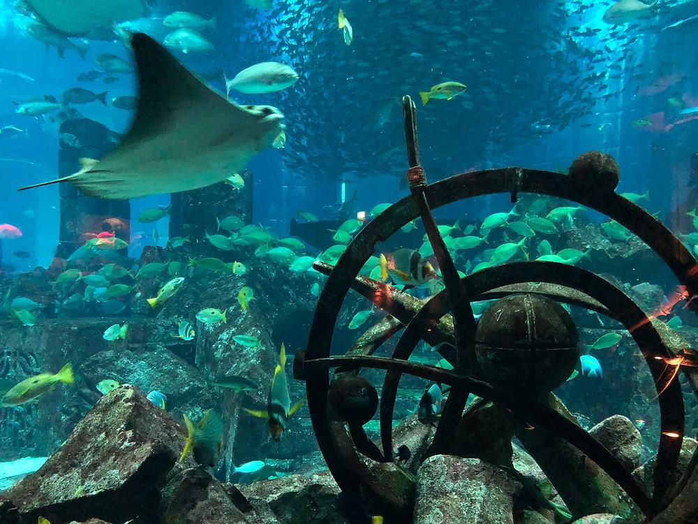 The Lost Chamber Aquarium in Atlantis The Palm, Dubai