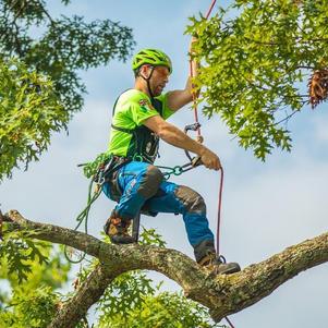 Tree Climbing and Tree Health