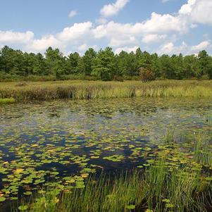 Pinelands Ecosystem Ecology