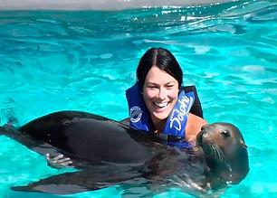 Sea Lion Discovery Cozumel.jpg