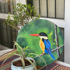 Black Capped Kingfisher