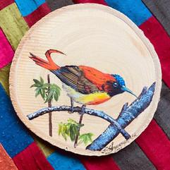 Fire Tailed Sunbird