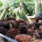 Automate, Woo Young Malaysians, Palm Oil Sector Told