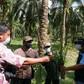 Kolaborasi adalah Kunci Peningkatan Pelataihan bagi Petani Kecil Kelapa Sawit di Indonesia