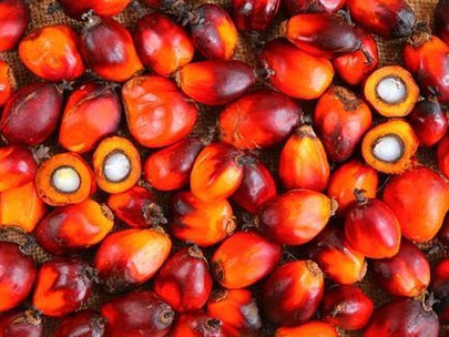 It's Important to Talk about Sustainable Palm Oil