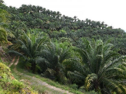 Sabah Makes Strides towards Sustainable Palm Oil Production