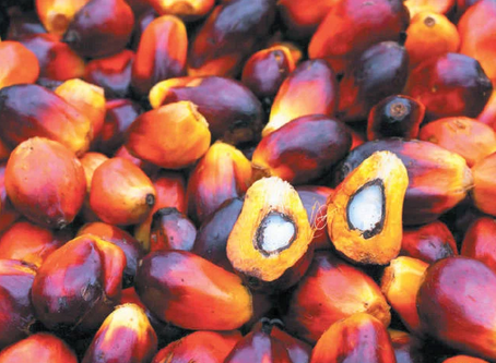 Blockchain, direct to consumer communication can help uplift palm oil's image