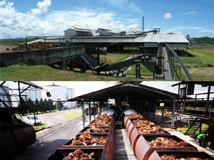 Strong CPO Prices Boost Boustead Plantations 1Q Net Profit