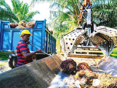 Potential Ban on Palm Oil, Glove Products by Canada is Unfounded