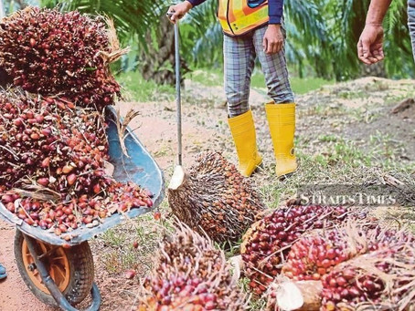 NASH Seeks to Reintroduce Smallholder Palm Oil Replanting Assistance Scheme
