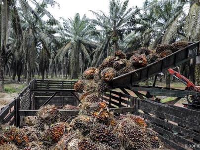 Industri Minyak Kelapa Sawit Beradaptasi Dengan Norma Baru, Model Bisnis di Tengah COVID-19