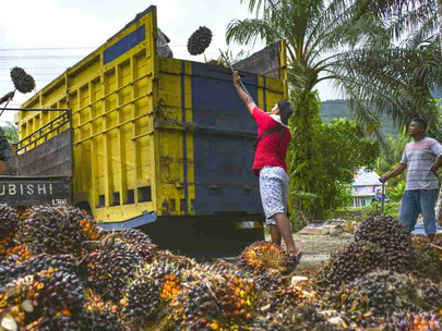 Tackling Indonesia's Poverty with Palm Oil